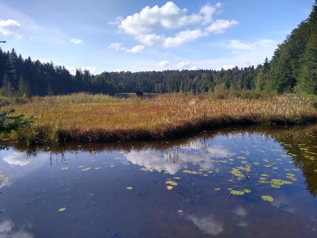 Blick auf den Hackensee